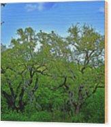Beautiful Texas View 2 Wood Print