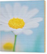 Beautiful Textured Background Of A Daisy Flower Wood Print