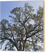 Beautiful Tree Blue Sky Sunshine Wood Print