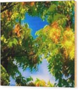 Beautiful Tree Tops In Sky Wood Print