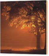 Beautiful Trees At Night With Orange Light Wood Print