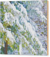 Beautiful Trees Covered With Snow In Winter Park Wood Print
