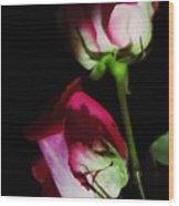 Beautiful Two Tone Roses 2 Wood Print