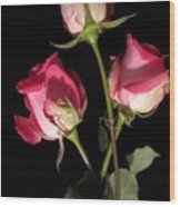 Beautiful Two Tone Roses 3 Wood Print