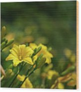Beautiful Vibrant Yellow Lily Flower In Summer Sun Wood Print