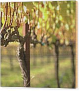 Beautiful Vineyard In Napa Valley Wood Print