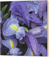 Beautiful Violet Colored Iris Flower With Rain Drops Wood Print