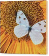 Beautiful White Butterfly On Sunflower Wood Print