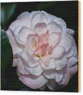 Beautiful White Camellia Wood Print