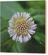 Beautiful White Flower Wood Print