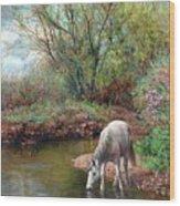 Beautiful White Horse And Enchanting Spring Wood Print