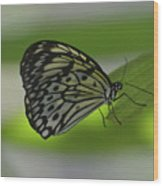 Beautiful White Tree Nymph Butterfly On  A Leaf Wood Print