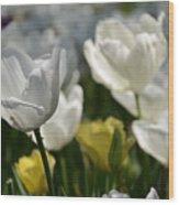 Beautiful White Tulips Wood Print