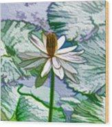 Beautiful White Water Lilies Flower Wood Print