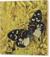 Beautiful Wings On Yellow Mums Wood Print