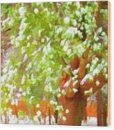Beautiful Winter Tree Wood Print