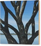 Beautiful Winters Day Wood Print