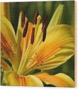 Beautiful Yellow Lily Wood Print