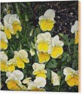 Beautiful Yellow Pansies Wood Print by Eva Thomas
