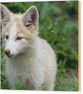 Beautiful Young Fox Portrait Wood Print