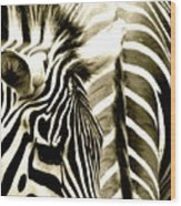 Beautiful Zebras Wood Print