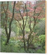 Beauty Among The Trees Wood Print