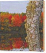 Beauty And The Birch - Nova Scotia Wood Print