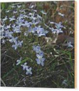 Beauty Blue Flowers Wood Print