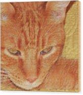 Beauty Of A Cat Wood Print