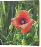 Beauty Of A Poppy  Wood Print