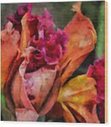 Beauty Of An Orchid Wood Print