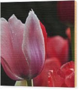 Beauty Of Spring Tulips 1 Wood Print