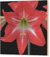 Beauty Of The Amaryllis Wood Print