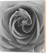 Beauty Of The Rose Ill Wood Print