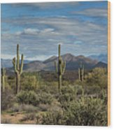 Beauty Of The Sonoran  Wood Print