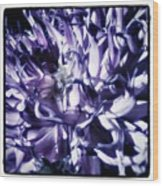 Beauty Out Of Chaos. No Wonder Dahlias Wood Print