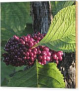 Beautyberry 2 Wood Print