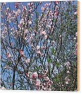 Beautiful Spring. Blooming Tree 2 Wood Print