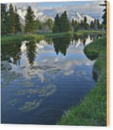 Beaver Dam At Schwabacher Landing Wood Print