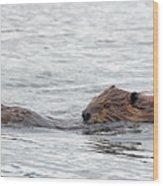 Beaver Pair I Wood Print