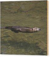 Beaver Swim Wood Print