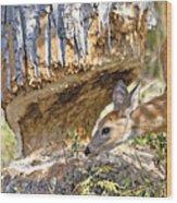 Beaver Wannabe Wood Print