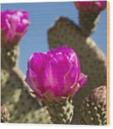 Beavertail Cactus Blossom 2 Wood Print by Kelley King