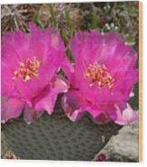 Beavertail Cactus Flowers Wood Print