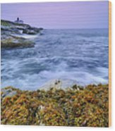 Beavertail Lighthouse, Jamestown, Rhode Island Wood Print