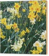 Bed Of Daffodils Wood Print