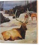 Bedded Down   Bull Elk In Snow Wood Print