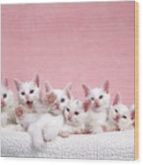Bedtime Kittens I'm Not Tired Mom Wood Print