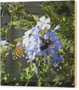 Bee And Butterfly II Wood Print