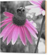 Bee And Cone Flower Wood Print